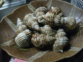 つぶ貝のボイル (8).jpg