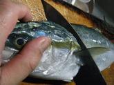 イナダの握り寿司 (2).jpg