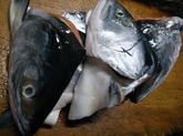 時鮭の煮物 (3).jpg